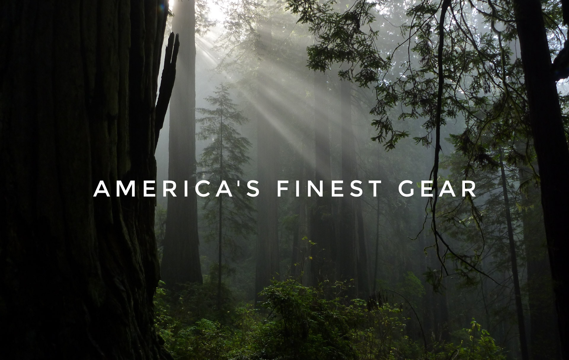Giant Redwood Forest American Gear Guide